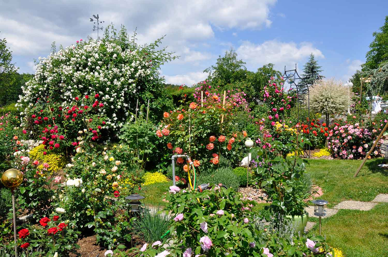 Mama's Rosengarten 2011